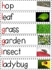 Insects: Vocabulary & Word Wall Resources
