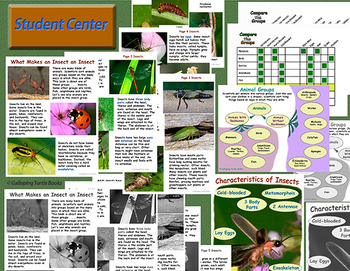 Insects – What Makes an Insect an Insect (Nonfiction Science and Literacy Unit)