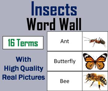 Insects Word Wall Cards