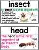 Insects Word Wall - Insects Vocabulary Terms with Visuals