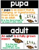 Insects Word Wall - Insects Vocabulary Terms for an Insects Unit
