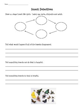 Insects Worksheet/Quiz