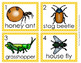 Insects Write the Room Activity