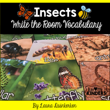 Insects Write the Room Vocabulary