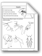 Insects and Ants