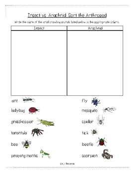 Insects and Arachnids Lower Elementary Small Crawling and Flying Animals