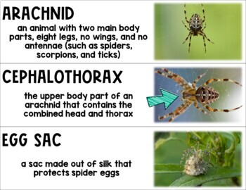 Insects and Arachnids Packet