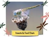 Food Chain - CC Science