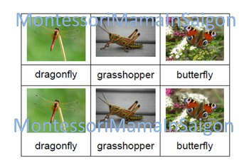 Insects and Minibeasts Montessori Three Part Vocabulary Cards