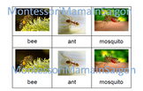 Insects and Minibeasts Montessori Three Part Cards