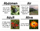 Insects and Plants Science Vocabulary Cards (FOSS Insects and Plants Module)
