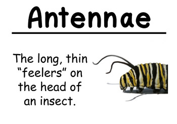 Insects and Plants Science Vocabulary Cards (Large)