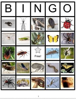 Insects and Relatives Bingo