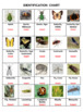 Insects and Relatives Crossword Puzzles