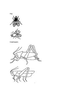 Insects and Spiders Clip Art