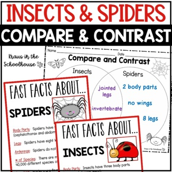 compare and contrast insects and spiders reading comprehension