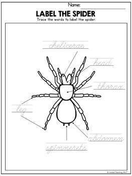 Insects and Spiders Handwriting Lessons (Cursive Edition)