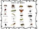 Insects and Spiders Unit: Science, Math and Literacy