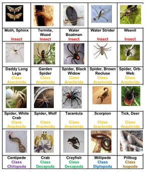 Insects and their Kin Board Game