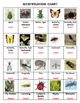 Insects and their Kin Pictominoes