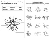 Insects foldable in Spanish Los insectos