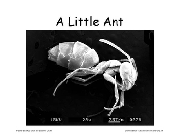 Insects for your Bulletin Board – Scanning Electron Microscope Images
