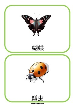 Insects in Chinese Flashcards