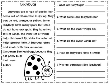 Insect Reading Comprehension Informational Passages l Bugs l Bees l Butterflies