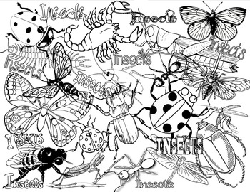 Insects or Bugs Coloring Page