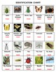Insects & their Kin