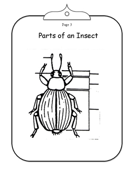 Insects vs. Spiders