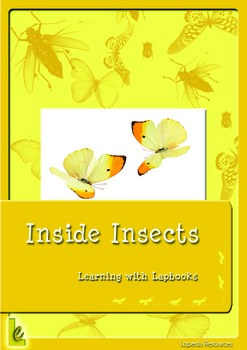 Inside Insects