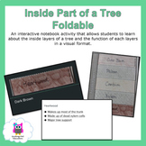 Inside Part of A Tree Trunk Foldable and Lesson Presentation