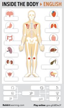 Inside the Body > PDF + Interactive Lesson