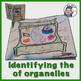 Inside the Plant Cell - 3D Model Foldable Project for Students