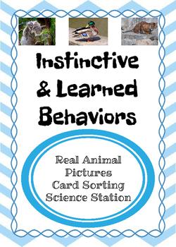 Instinct vs. Learned Behavior Card Sort
