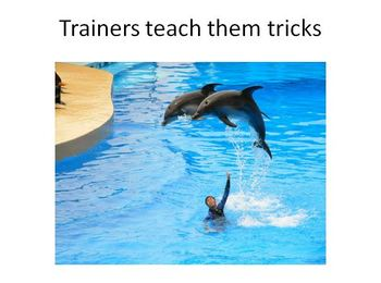Instinctive Animal Behaviors