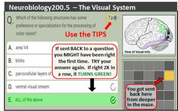 Instructor's Pak for the Neurobiology200 Semester Pak of Maze Games