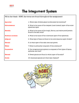 Integument System Test or Review w/key
