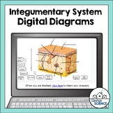 Integumentary System Diagrams for Distance Learning - Skin