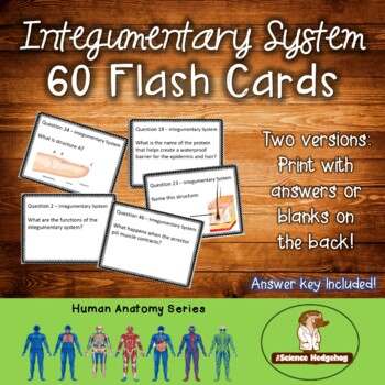 Integumentary System Flash Cards