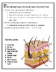 Integumentary System- Hair, skin, nails Notes