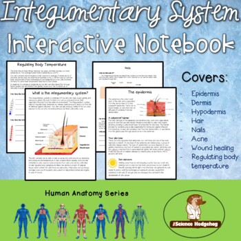 Integumentary System Interactive Notebook by The Science Hedgehog