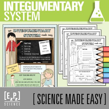 Integumentary System Ppt Worksheets Teaching Resources TpT