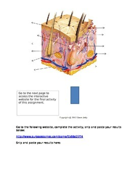 Integumentary System Match, D & D, Internet Activity with KEY