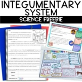 Integumentary System Nonfiction Article FREEBIE