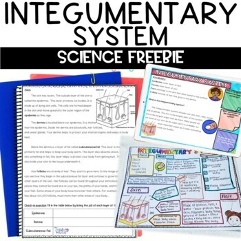 Integumentary System Nonfiction Article