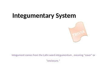 Integumentary System PPT