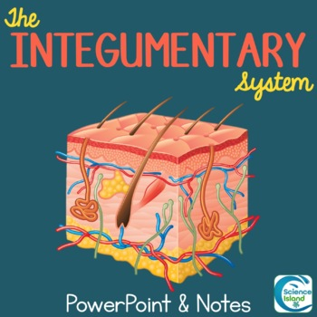 Integumentary System PowerPoint Lesson and Notes - Skin Power Point