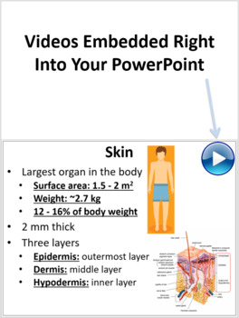 Integumentary System - PowerPoint Lesson and Student Notes